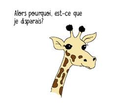 braconnage-giraffe-3