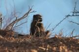 Singe Twylfontein