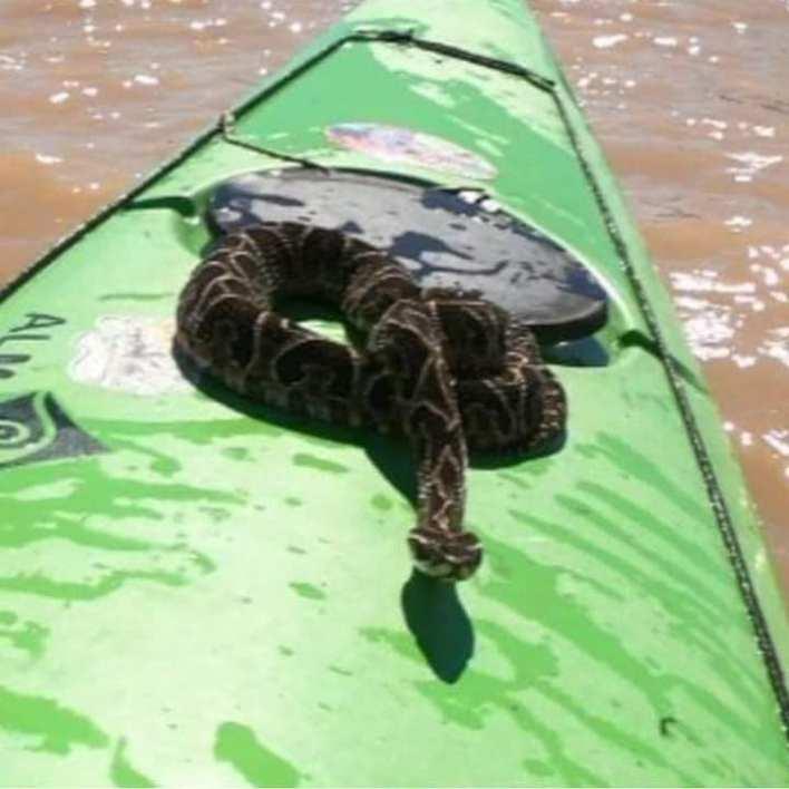 Una yarará se subió a su kayak mientras navegaba en el Río Paraná
