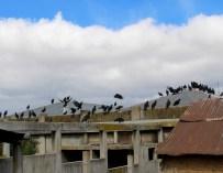 Mala Sangre: Migración y la industria de la carne