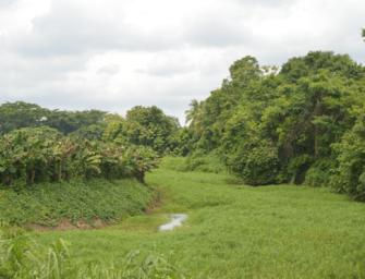 La lucha por el agua en la Costa Sur