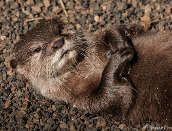 "An otter is the victim of poor education and Guatemala's violent ""culture"""
