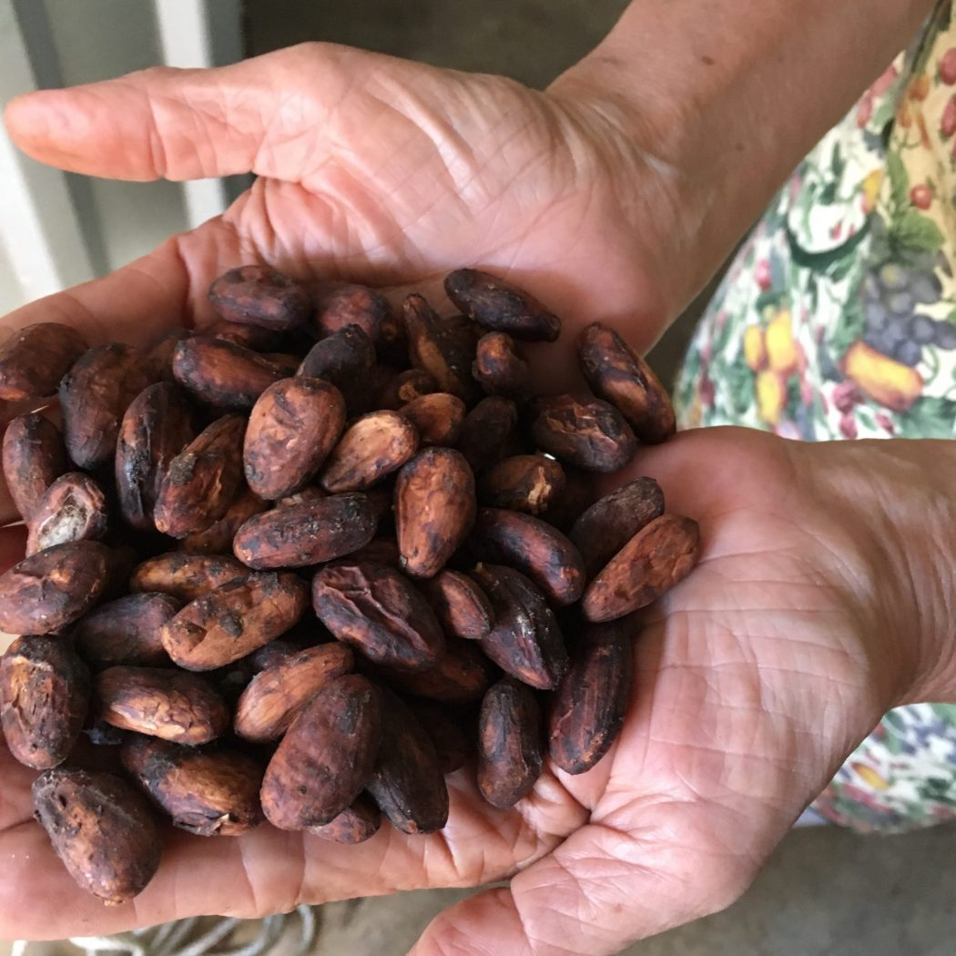 Cacao Si 1
