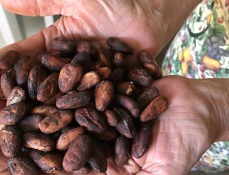 Learning about Cacao Production