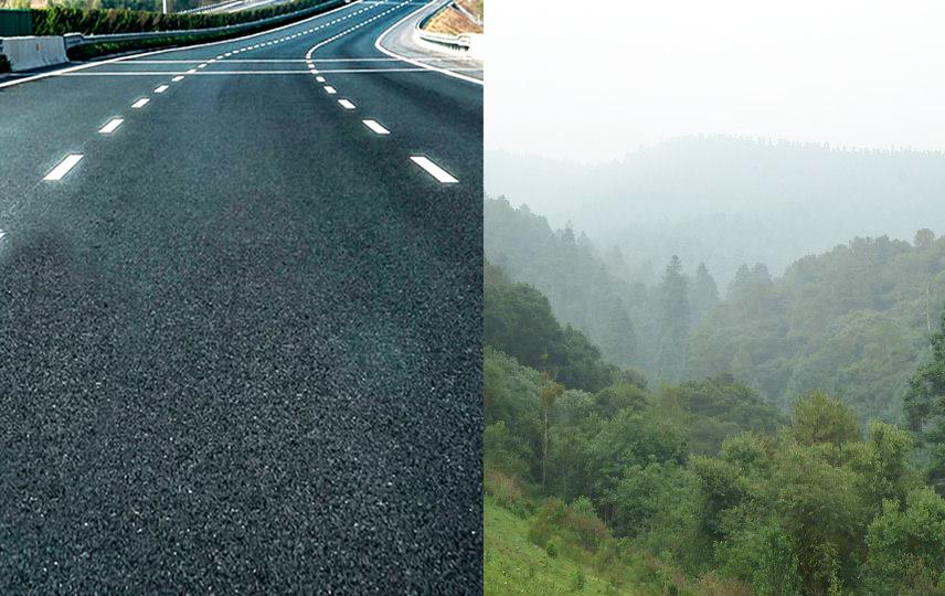 carretera bosque