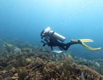 Una Joya Guatemalteca Bajo Amenaza:  Descubrimiento y Exploración del Arrecife de Coral Corona Caimán