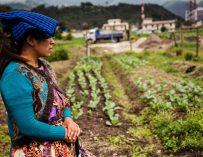 Mujeres y uso de la tierra en Guatemala: un problema antiguo, todavía sin solución