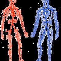 Ejercicio recomendado en daño del sistema vascular y pie diabético