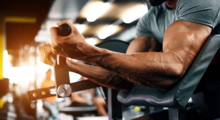 ¿Qué tipo de fibra muscular prevalece en el bíceps?