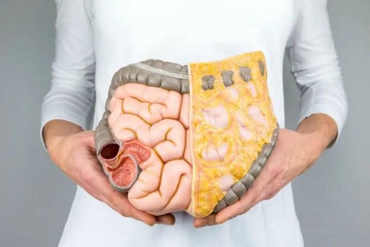 ¿Qué es la grasa esencial?