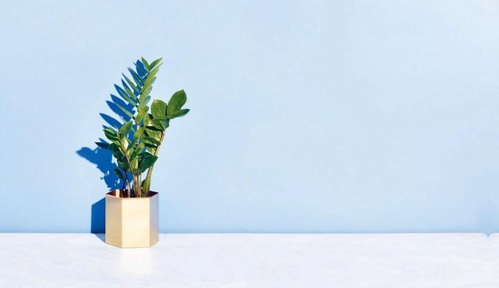 ¿Qué plantas pueden ayudar a purificar el aire?