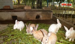 start a rabbit farm in Nigeria
