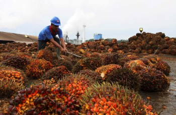 buy and sell palm oil