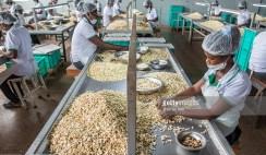 cashew nut processing company