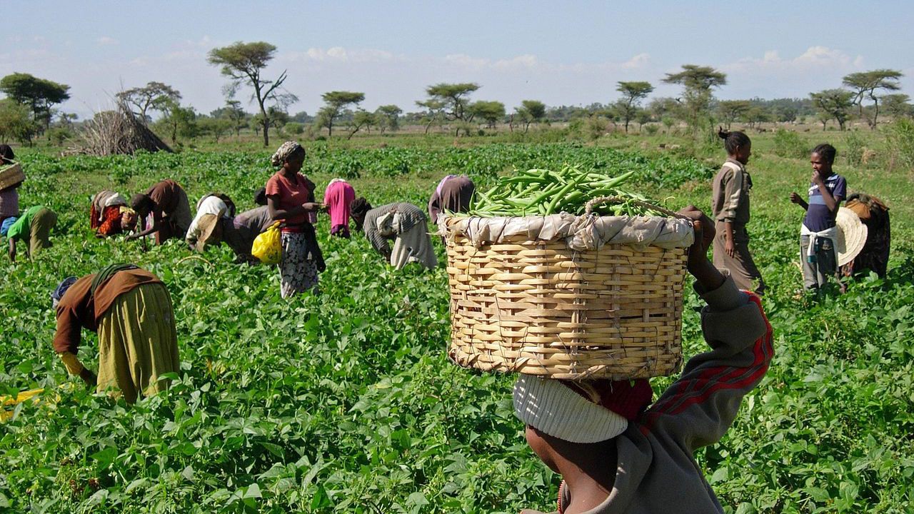 Resolve For Smallholder Farmers At The Lagos Agricultural Summit