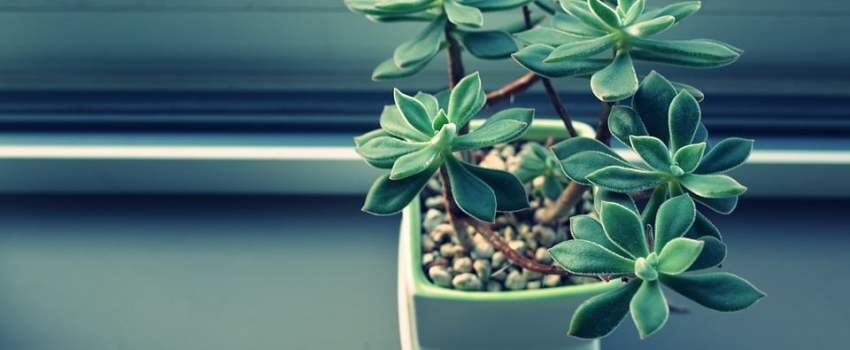 Seasonal Plants in Your Office