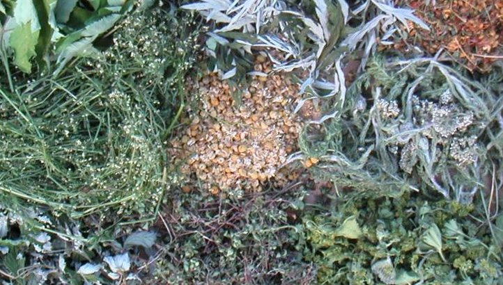 Hierbas aromáticas (I)