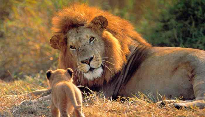 leon--