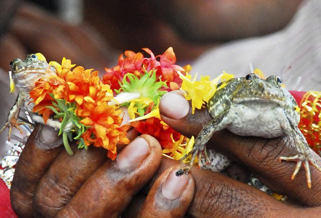 boda de ranas 30