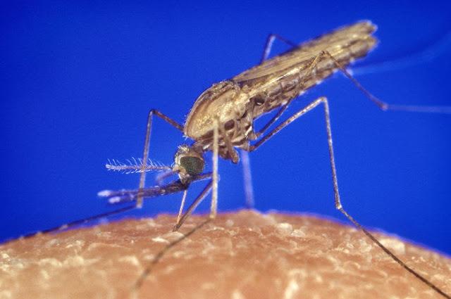 picadura de mosquito 2