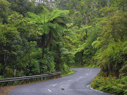 Acceso al Waipoua forest. © Cezary Kasprzyk.