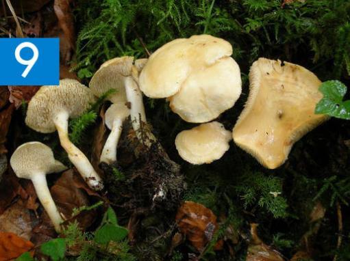 Dos-nuevas-especies-de-setas-en-la-peninsula-iberica_image_380