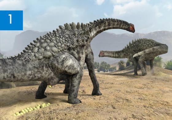 Huevos-fosiles-de-dinosaurios-del-yacimiento-de-Coll-de-Nargo-Lleida_image_380