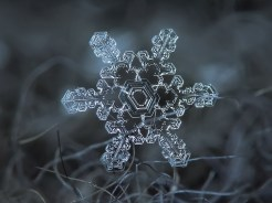 copo de nieve 10