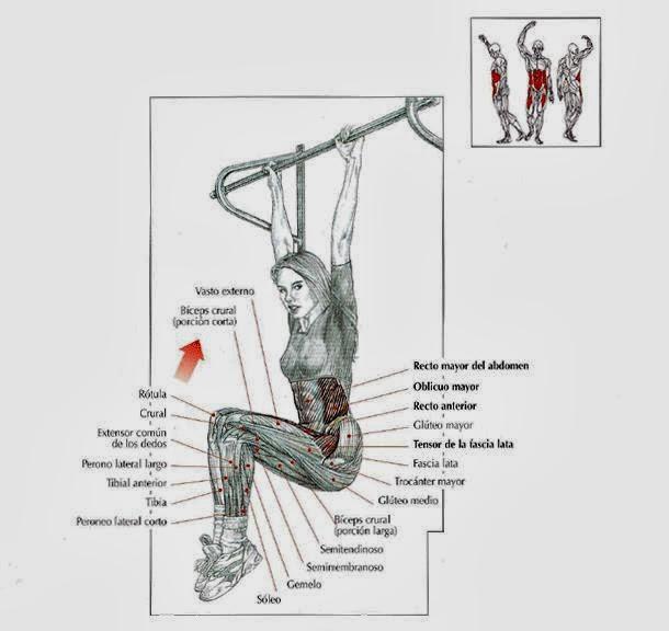 elevaciones-de-piernas-suspendido-la-barra-fija-2big