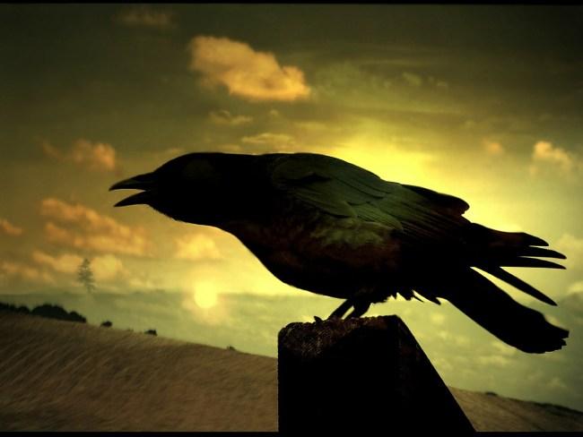 raven-73179_1280