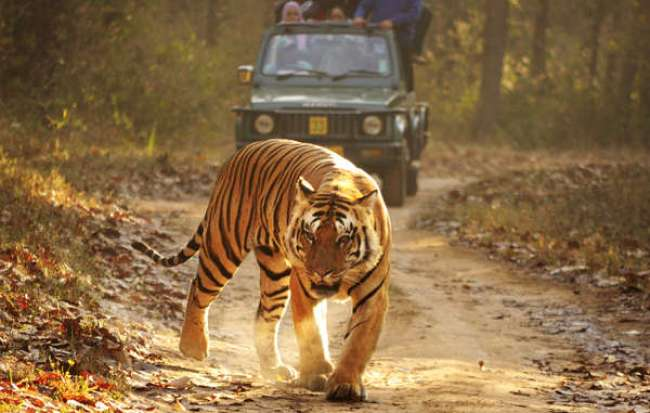 royal-bengal-tiger-kanha-cut_article_column