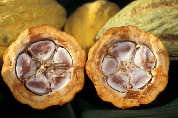 Los-flavanoles-del-cacao-ayudan-a-retrasar-la-progresion-de-la-diabetes-tipo-2-en-ratones_image_380