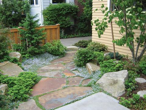 patios of moss and algae