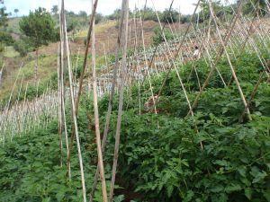 Ferme biologique aux Philippines. (source: ministère du commerce et des affaires étrangère [CC BY 2.0], via Wikimedia Commons)