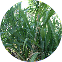 Agriculture Category