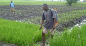 Benue farmer