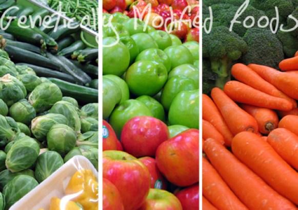 GMOs  GMO foods not in Nigerian markets, says govt GMOs