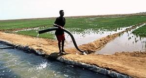 eritrea-irrigation