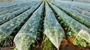 Climate-smart agriculture. Photo: talkvietnam.com