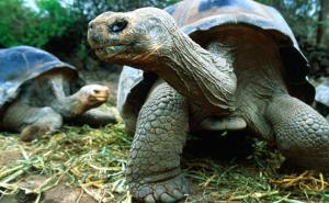 Tortoises. Photo: Jeff Greenberg / Lonely Planet Images