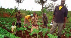 World Food Day 2014: Family farmers key to alleviating global hunger – FAO family farmers kenya