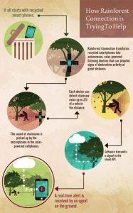 illegal-logging-003  Combating illegal logging with smartphones, smarter shopping illegal logging 003 187x300