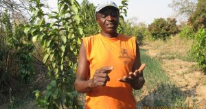How climate challenges smallholder vegetables farming in Zambia Moroson Hakakwale making a point during interview