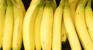 GM bananas  Civil society, farmers oppose US human trials of Uganda-bound 'super banana' GM bananas