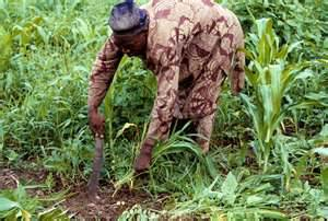 Agriculture in Africa is rain fed and thus vulnerable to climate change. Photo credit: osundefender.org