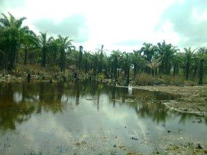 Ibuu Creek polluted by an oil spill, in Okwuzi Community in Rivers State. Photo credit: Dandy Mgbenwa