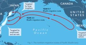 tuna-pacific-tuna-migration-776-lw