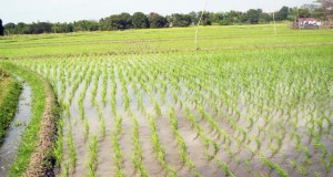 FADAMA-Project  FADAMA III scheme uplifts farmers in Niger State FADAMA Project