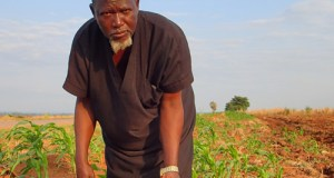 Mohammed Sabtuwo  Seeds of success in Ghana Mohammed Sabtuwo