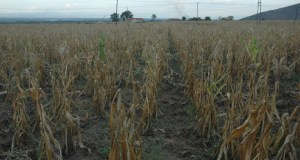 dried-up  Acid rain threatens life in Uganda dried up1 e1443653454226